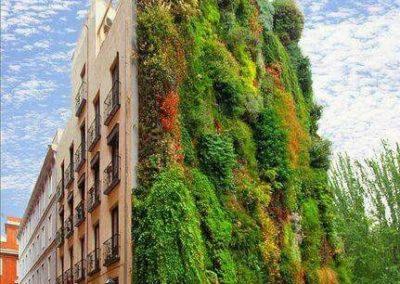 Feutre-mur végétal - Patrick Blanc