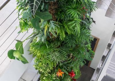 Plant Design - Tour végétale