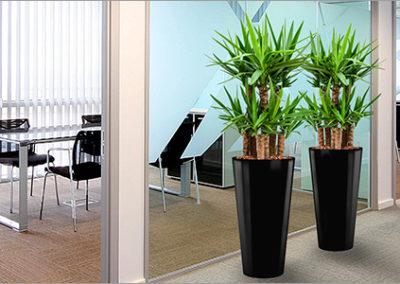Nieuwkoop - Bac plantes bureau