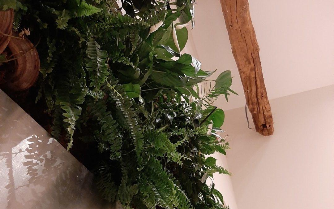 Greenwall intérieur . Mur végétal recto-verso arrosage manuel . Jungle .