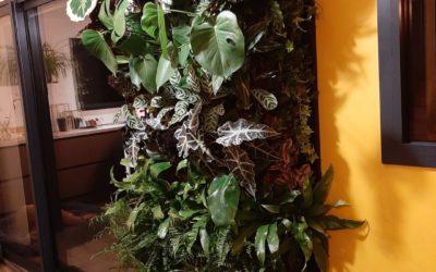 Mur végétal intérieur . arrosage automatisé