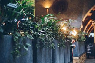 Plantes tropicales intérieures . Pots suspendus & bacs à plantes