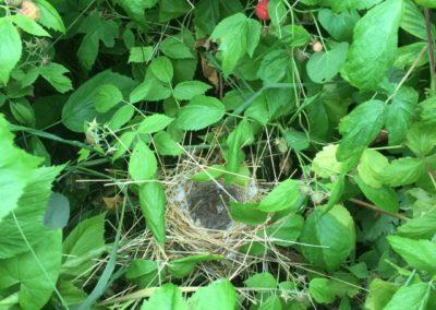 Nidification de petit oiseaux