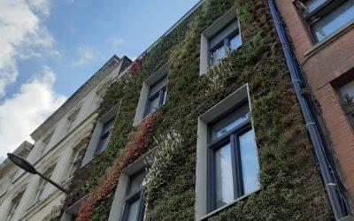 Mur végétal extérieur . Floraison 4 saisons