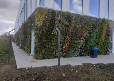 Mur végétal extérieur sphaigne