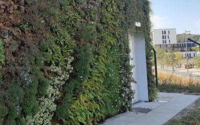 Mur végétal extérieur . Plantes indigènes