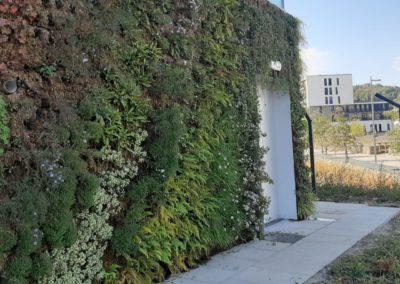 Mur végétal extérieur modulaire