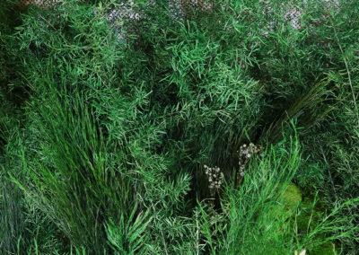Mur végétal stabilisé - Asparagus