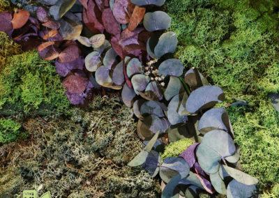 Mur-végétal-stabilisé-Eucalypthus