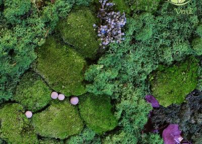 Mur végétal stabilisé - Lichen, mousse boule, gypsophile