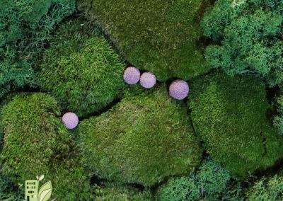 Mur végétal stabilisé - mousse boule